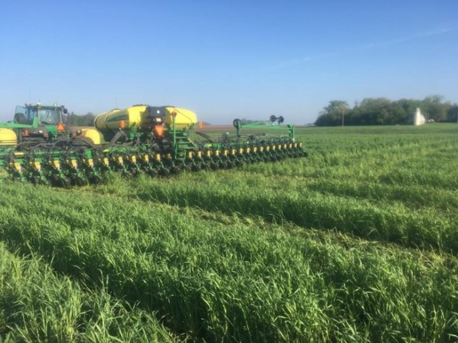 Planting corn in to cereal rye