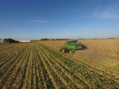 Interseeded cover crops at harvest